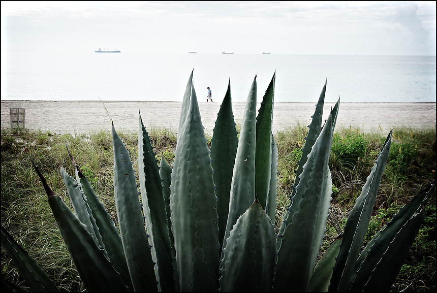 Agave<br /> From &quot;Color Blind&quot; series. Miami, 2009