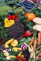 Garden Bounty: beans, endive, squash, Calendula, nasturtium, broccoflower, carrot, endive, basil, squash, radish, lettuce, pansy, tomatoes, mushrooms, broccoli, beans, blueberries, raspberry, vegetables, herbs, berries and edible flowers