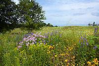 Crow-Hassan Park, prairie reserve in Three Rivers Park Distict, Minnesota with summer blooming wildflowers Bee balm, Rudbeckia, Goldenrod and Vervain