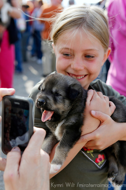 North America, USA, Alaska. A Husky pup smiles for an iphone camera while a young girl giggles.