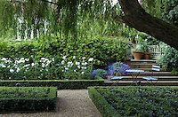 Framed by the fronds of the large willow, the rose border next to the stone steps leading to the terrace above