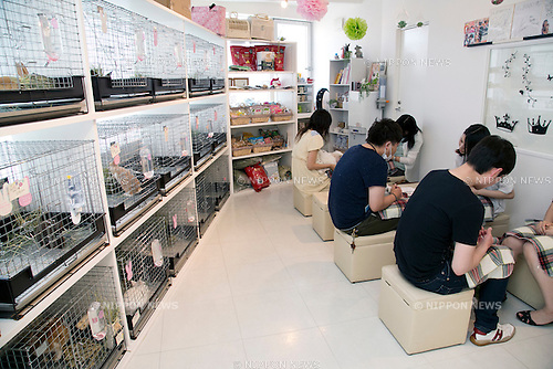 """June 19, 2014, Tokyo, Japan - Customers hold rabbits at the Ms. Bunny pet shop. Ms.Bunny, a pet shop and cafe based in Roppongi, provides its customers some healing from the stress of living in a huge metropolis like Tokyo by interacting with furry pets while having a cup of tea. The store, which opened in 2011, (the year of the rabbit according to the Chinese Zodiac) together with several other bunny-related cafes and shops around Tokyo, allows customers to play with rabbits and also sells them and offers services such as boarding and grooming. The most popular service seems to be the """"Usagi Kimochi Cafe"""", or """"Rabbit Feelings Cafe"""", which allows anyone to spend some time with a furry rabbit while having a drink. The fee is a reasonable 750 JPY per 30 minutes, with the possibility to extend the experience by 30 minutes for an additional fee. A 3,000 JPY per hour special """"Usanpo"""", or """"walk with the bunny"""", service is also available. According to shop staff, customers, of which 70 percent seem to be women, can choose any of the 20 rabbits available in the store to play with or to buy. (Photo by Rodrigo Reyes Marin/AFLO)"""