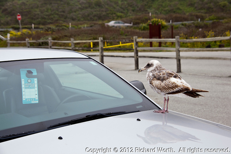 "There is a new ""Use Pass Inspector"" on duty at Pomponio State Beach south of Half Moon Bay on the California coast."