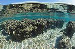 In the hyper-saline water of Hamelin Pool,  the rocks aren't quite what the appear to be. They are Stromatolites, the oldest living organisms on the planet..Shark Bay/West Australia