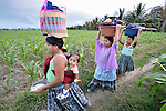 Women walk home through a corn field after washing their laundry in a river in Las Flores, Ixcan, Guatemala.