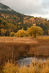 Idaho, Bonners Ferry.  Fall colors at the Kootenai National Wildlife Refuge