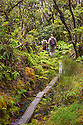 Hikers on boardwalk through rainforest at Kamakou Preserve, Molokai, Hawaii (a Nature Conservancy preserve).