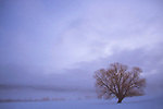Idaho, New Meadows. A solitary tree stands in a moody winter landscape.