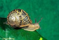 Snails, Slugs, Mollusks
