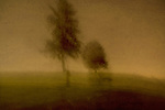 Two trees in a blur