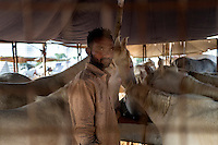 A horse owner inside a cage for horses at Pushkar fair ground. Rajasthan, India.
