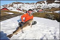 BNPS.co.uk (01202 558833).Pic: Dieter Eisele/BNPS..***Please use full byline***..An angler is celebrating after breaking the record for catching the world's biggest ever cod...The mighty fish weighed in at 103lbs, smashing the previous and long-held world record by nearly 5lbs...And the biggest specimen of Britain's favourite eating fish to be pulled out of the water by rod and line was caught by a German...Michael Eisele was on a fishing trip to Norway - the so-called El Dorado of cod fishing - when he snared the whopper..