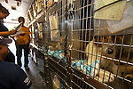 A dog awaits entry to a temporary shelter at the Columbia, SC airport after a raid on a puppy mill in Johnston, SC on Tuesday, Sept. 11, 2012. HSUS workers found over 200 dogs, nine horses and 30-40 fowl.