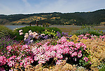 flowers and Bolinas Lagoon