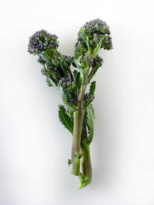 Fresh purple brocoli spears