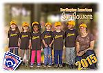 2015 Burlington American Sunflowers