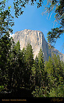 El Capitan Vignette from Merced River in Summer, Yosemite Valley, Yosemite National Park