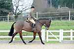 28/02/2016 - Ring 1 (Outdoors) - BSPS area 15 showing show - Brook Farm Training Centre