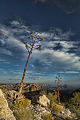 Near the East Pocket are some of the best overlooks anywhere and these two Agave just add to the expansive views of Sedona.