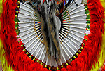 Close up traditional bustle regalia at the Thunderbird Powwow at the Queens County Farm Museum.<br /> <br /> An example of ethnic pride, heritage, celebration, and traditional folk art crafts.<br /> <br /> The Native American bustle is a traditional part of a man's regalia worn during a dance exhibition or pow wow and originates from the Plains region of the United States. The men's bustle is typically made of a string of eagle or hawk feathers attached to a backboard. Eagle and hawk feathers are sacred religious objects to Native American people and the possession of eagle and hawk feathers are protected by the eagle feather law.<br /> <br /> The traditional bustle or &quot;old-style&quot; bustle, being circular.  Fancy dancers generally wear two bustles, one attached to a belt above the buttocks and another attached to a harness on the back.