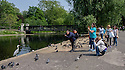 London, UK. 28.05.2016. A group of photographers take pictures of a heron in Regent's Park. Photograph © Jane Hobson.