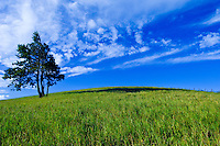 Rural hill and pasture with tree in Haiku, Maui