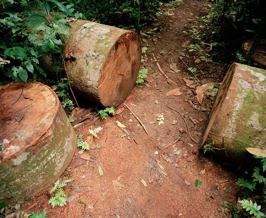 Sliced tree trunk on hiking path, Tambopata Nature Reserve, Amazon region, Peru, South America