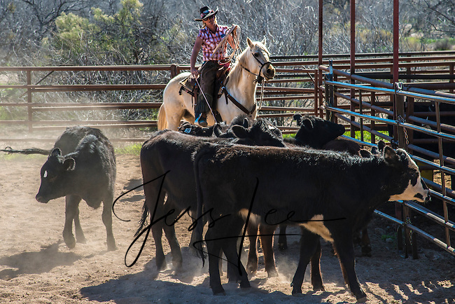 Image result for jess lee cowboys photos