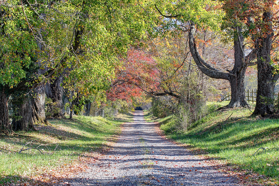 A tree covered farm road in Orange County, Va. Photo/Andrew Shurtleff