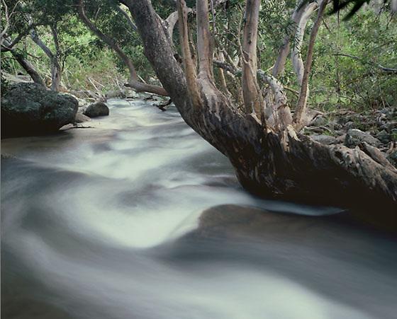 Summer Flood,<br /> Davies Creek,<br /> FNQ
