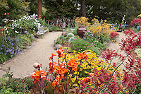 Gravel path around colorful California garden island bed with orange and yellow flower perennials, Canna, Anigozanthos, Rudbeckia; Schneck Garden