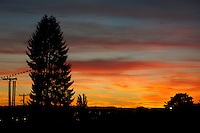 Coniferous tree silhouetted by the setting sun, Vancouver, BC, Canada