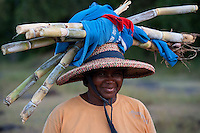 Woman returning home after a days work at her home garden on the island of Rodrigues. She carries back with her sticks of sugarcane on her head.