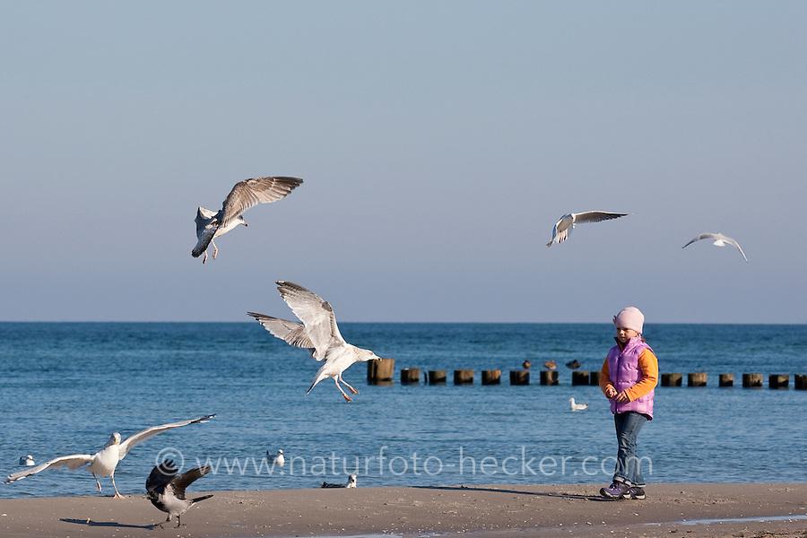 Kinder füttern Möwen am Strand, Silbermöwe, Larus argentatus, herring gull und Lachmöwe, Larus ridibundus, black-headed gull