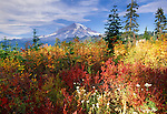 Fall color, Mt. Rainier National Park, Washington, USA