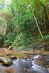 Khao Phanom Bencha National Park-Rainforest Stream