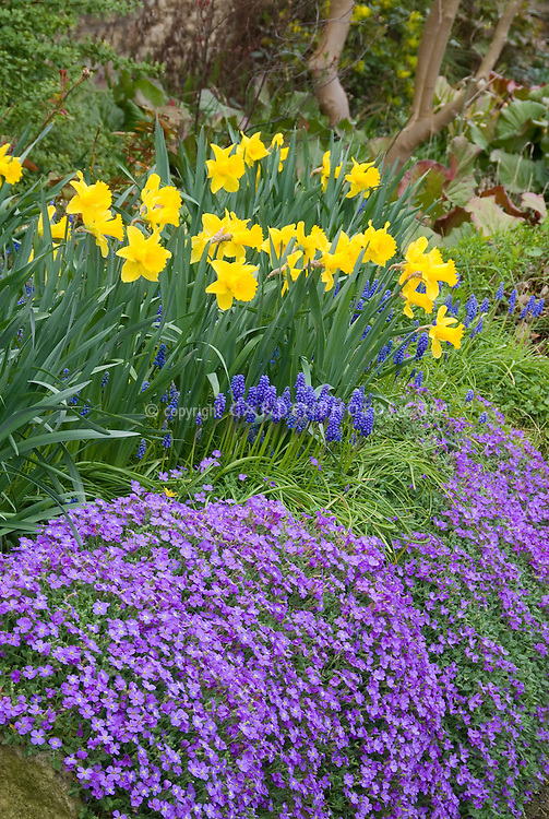 Spring garden bulbs and flowers plant amp flower stock photography