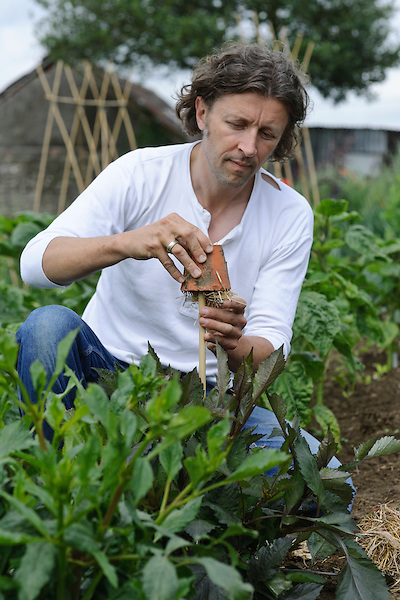 Set traps by filling an upturned pot with straw or dry grass and place on a cane amongst the uppper foliage