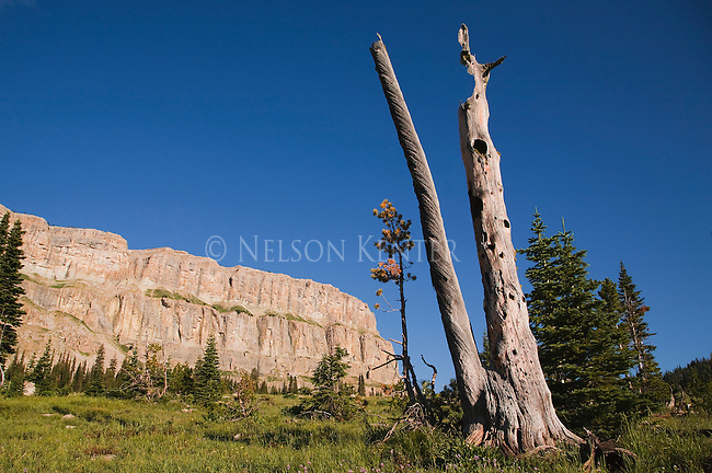 A standing dead tree in front of the cliffs of the Chinese Wall in the Bob Marshall Wilderness in Montana