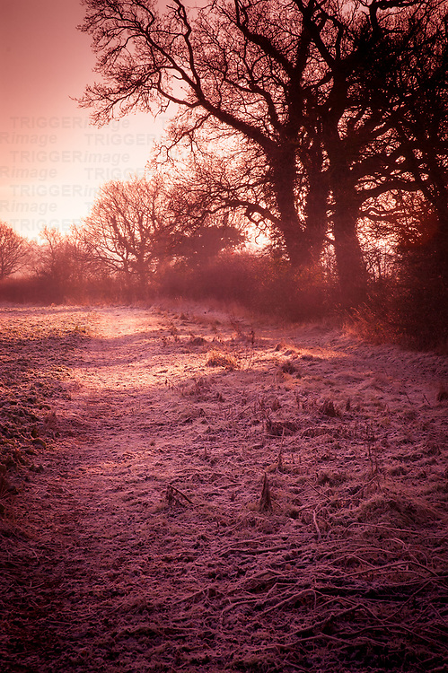 Winter in the countryside in Suffolk England