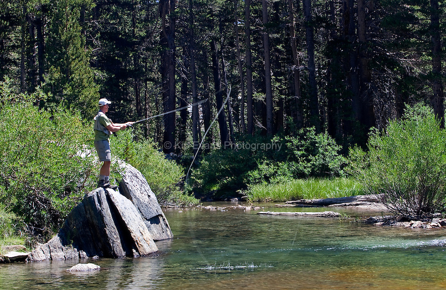 Fly Fisherman Sierra Stream Flowing from Moutnains, Sierra Nevada CA