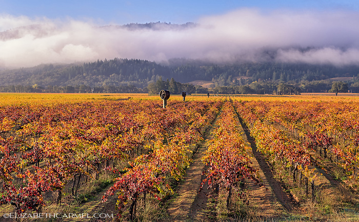 Clearing Storm, Napa Valley