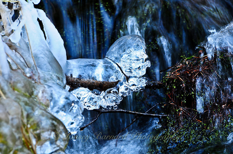 &quot;LION IN WINTER&quot;<br />
