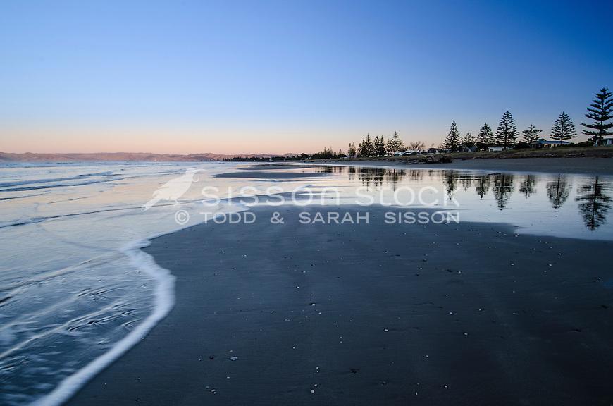 Sunrise, reflection of norfolk pines at Waikanae Beach, Gisborne. North Island New Zealand.
