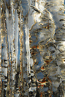 &quot;ICICLES-5&quot;<br /> <br /> The winter icicles that form any place they can find to hang, even eaves create very imaginative works of natural art. One is likely to find these amazing designs most anywhere in a Montana winter.