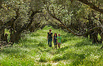 Sandy Sims walks with her daughters Sophie Sims, 9 and Cecilia Sims , 7, through the 100 year old olive orchard at Featherdown Farm at the Chaffen Family Orchards near Oroville CA, Saturday April 20, 2013.<br /> Brian Baer/Special to the Bee