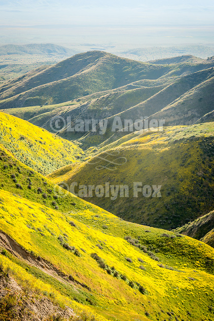 Canyons on the west side of the Temblor Range covered with colorful golden wildflowers in spring, Carrizo Plain National Monument, San Luis Obispo County, Calif.