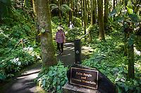 Tourists stroll through the palm jungle near the Onomea waterfalls at the Hawai'i Tropical Botanical Garden in Onomea, Big Island of Hawai'i.