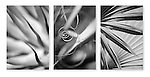 Close-up photographic triptych of agave, yucca and palm. Images 244, 245 and 246.