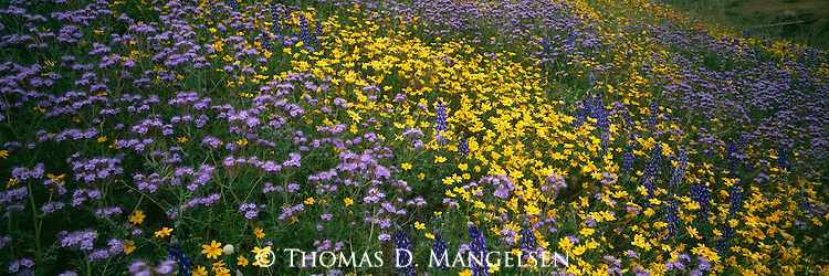 Wildflowers bloom on a hillside in the Tehachapi Mountains in California.